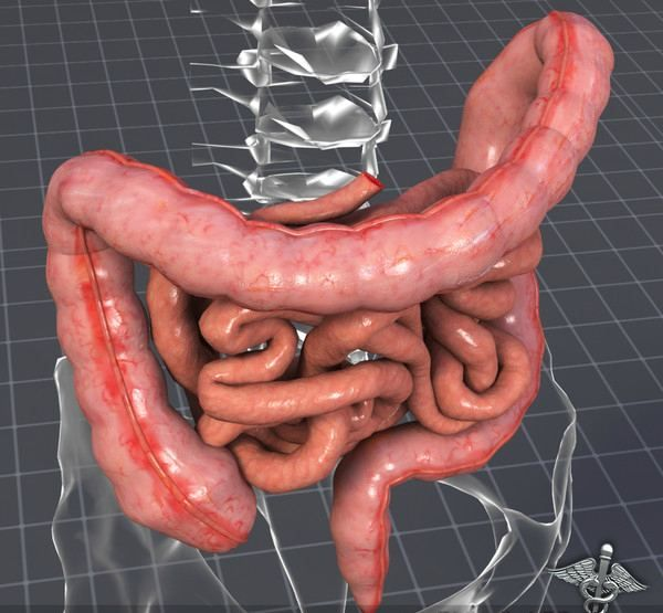 large small intestines meet the press