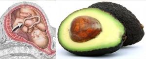 avocado fetus